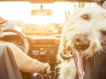 Top-10-Tipps: Lifehacks fürs Auto