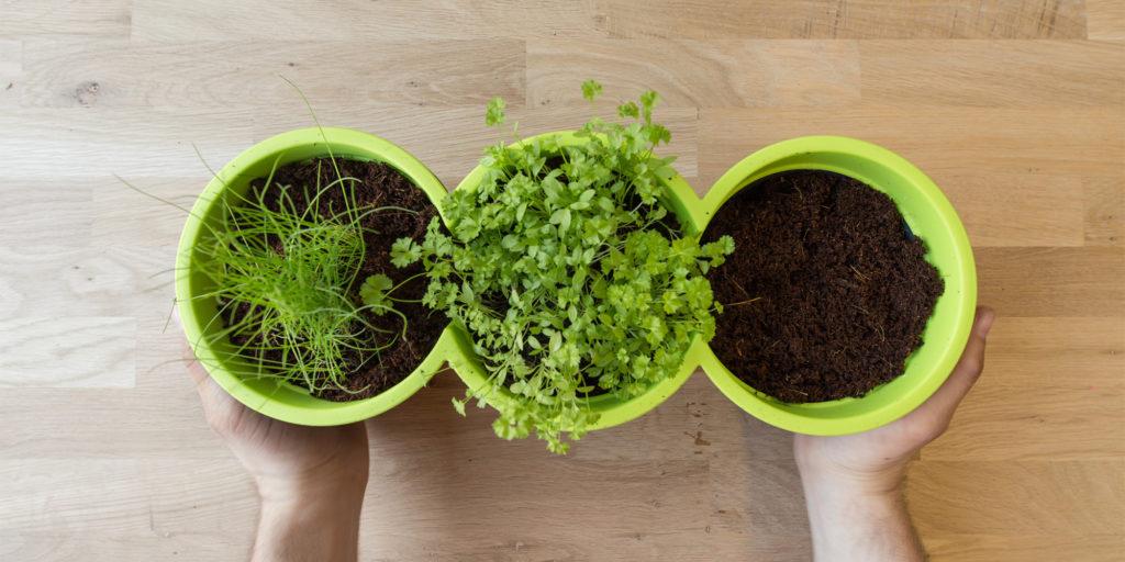 Leckeres aus dem eigenen Garten: Kräuter selbst pflanzen
