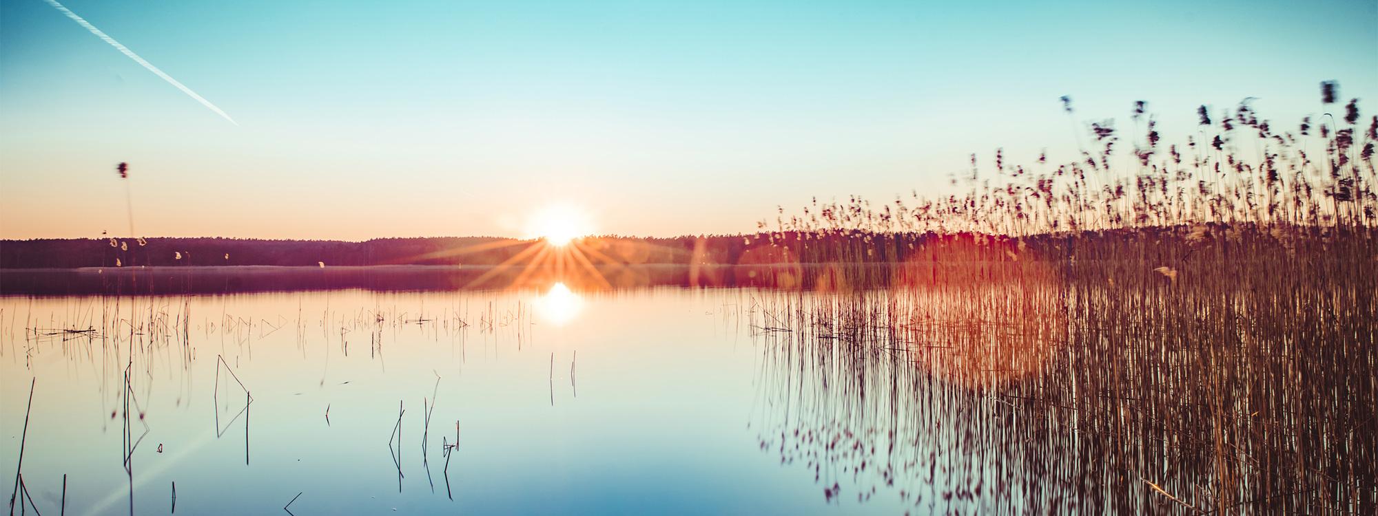 Mecklenburgische Seenplatte: Saarschleife: Wanderschuhe , Sommerwiese