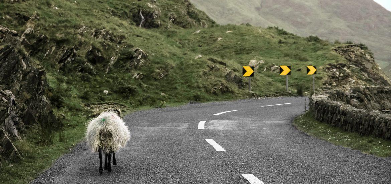 Linksverkehr in England & Co.: Nützliche Tipps für Autofahrer
