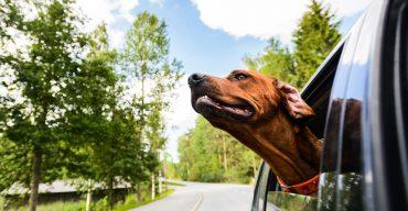 Geruch aus dem Auto entfernen – so geht´s!