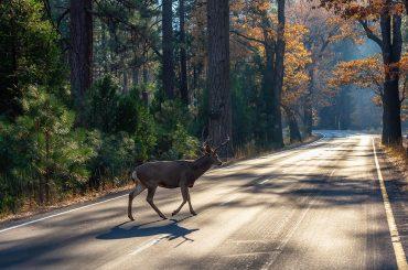 Vorsicht vor Wildwechsel: Das sollten Sie beachten